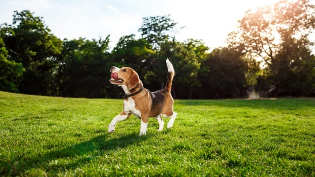 why-do-dogs-walk-in-circles-guide