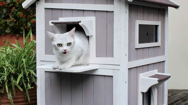 where-to-find-a-waterproof-outdoor-cat-house