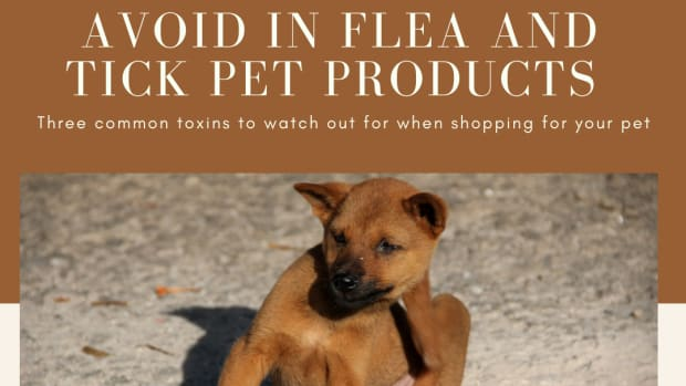 more-toxins-found-in-pet-products