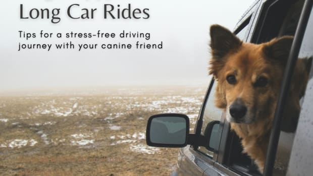 how-to-keep-your-dog-happy-on-a-long-car-journey