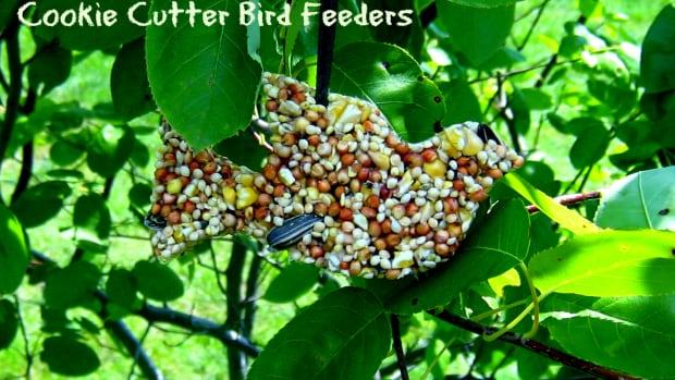 easy-crafts-for-kids-homemade-cookie-cutter-birdfeeder