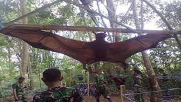 orang-bati-indonesias-flying-primate