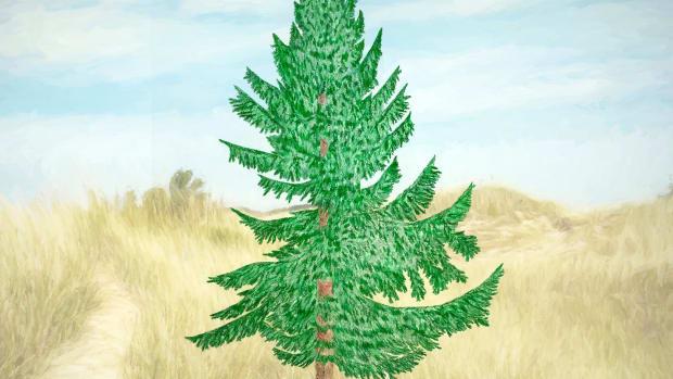 common-evergreen-conifers-of-michigan