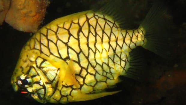 10-fascinating-organisms-that-glow
