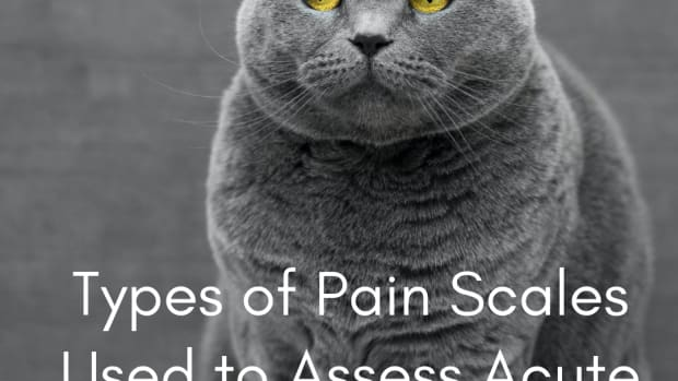 types-of-pain-scales-used-to-assess-pain-in-cats