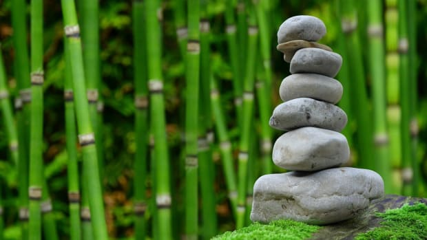 the-balance-of-nature-the-need-of-the-hour