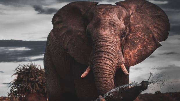spirit-of-the-elephant