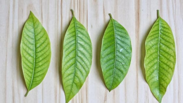 the-difference-and-similarities-between-kanna-kava-and-kratom