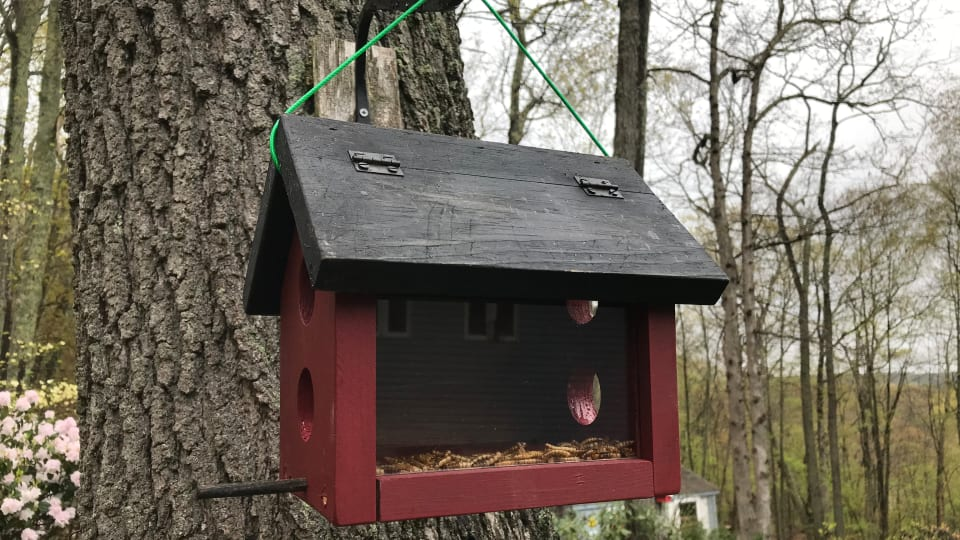How to Make a Bluebird Feeder (Bluebird Feeder Plans)