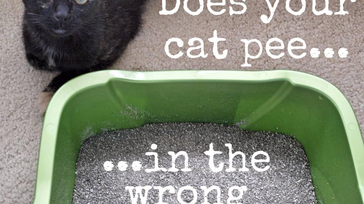 How To Get Rid Of Sour Cat Urine Odor