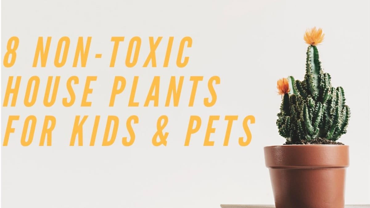 8 Non Toxic House Plants For Children Cats And Dogs Dengarden Home And Garden