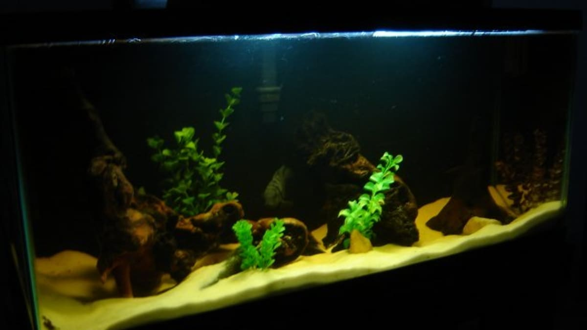 How To Incorporate Driftwood Into Your Natural Aquarium Or Fish Tank Pethelpful By Fellow Animal Lovers And Experts