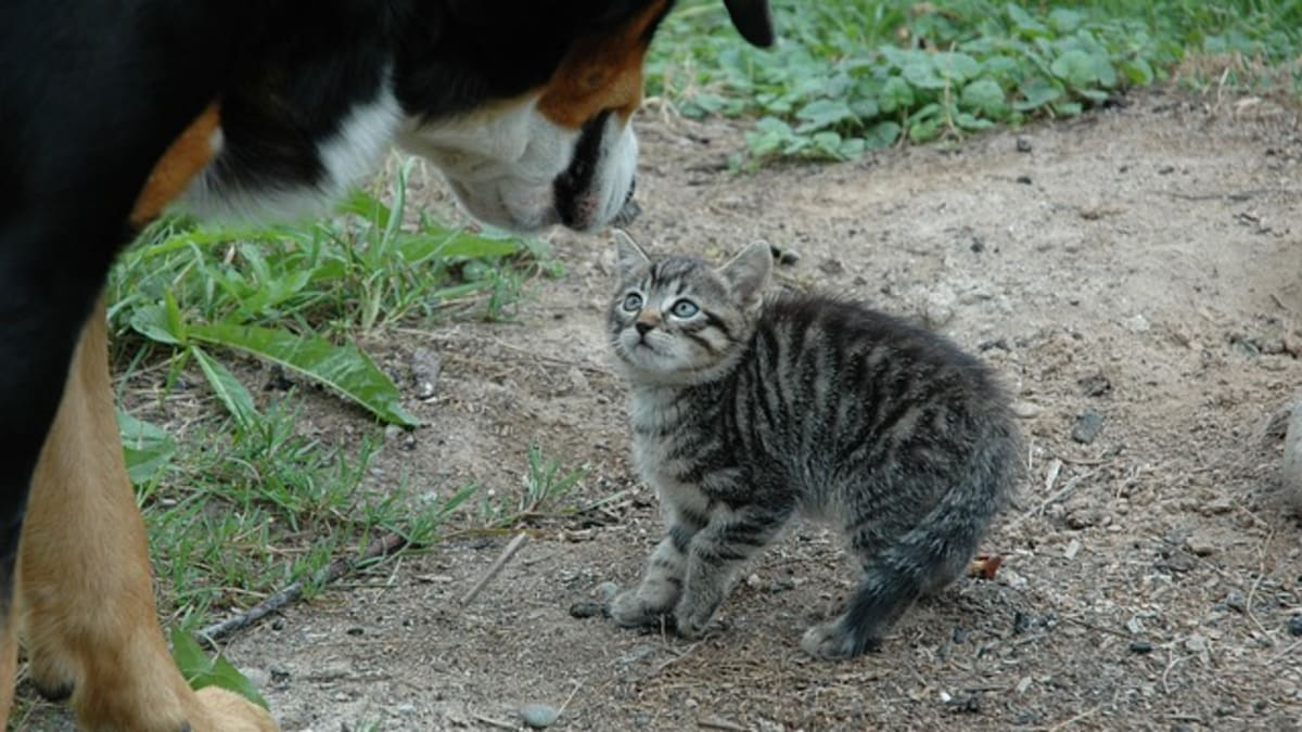 Dog Breeds That Do Not Get Along With Cats Pethelpful By Fellow Animal Lovers And Experts