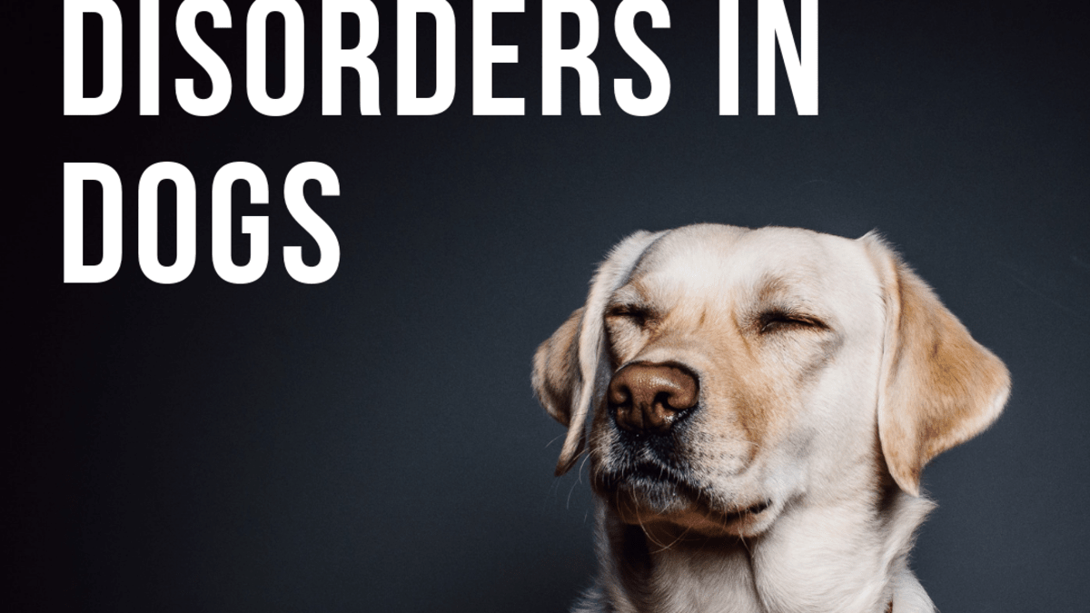 Warning Signs Of Neurological Disorders In Canines Pethelpful By Fellow Animal Lovers And Experts