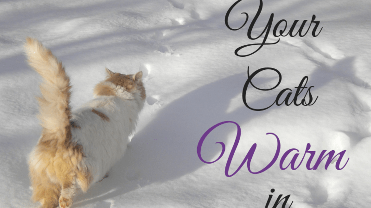 How To Keep Feral And Outdoor Cats Warm And Safe In Winter Pethelpful