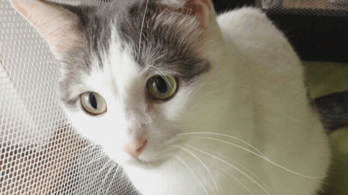 Reasons Cats Bite And How To Prevent Your Cat From Biting Pethelpful By Fellow Animal Lovers And Experts