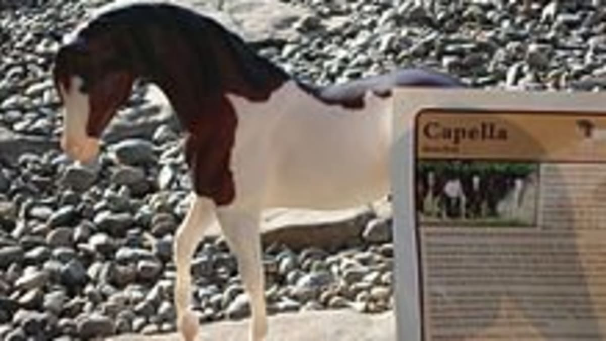 Can Extinct Horse Breeds Be Cloned And Brought Back To Life Pethelpful By Fellow Animal Lovers And Experts