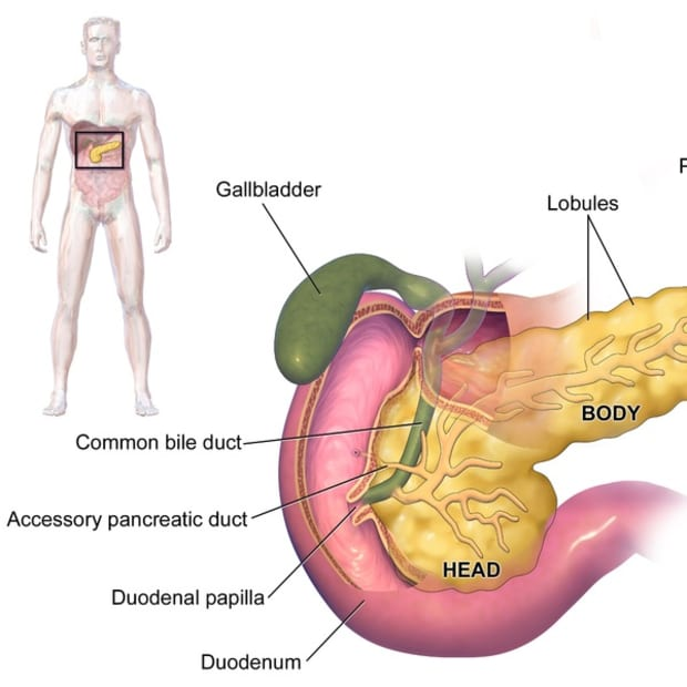 pancreas-function-and-health-problems