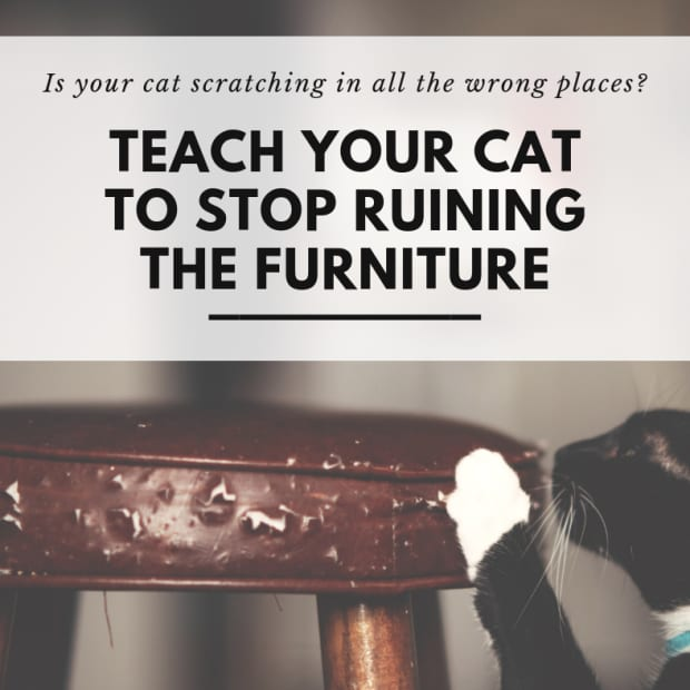 is-your-cat-ruining-your-furniture-give-your-cat-something-to-scratch