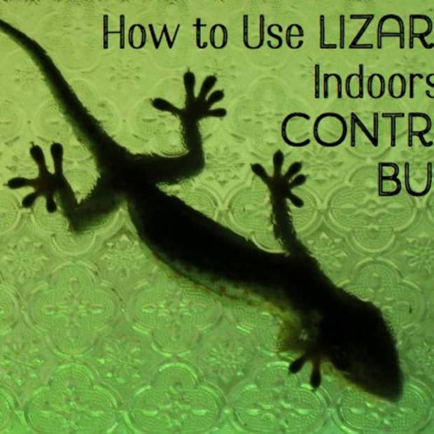 lizards-for-bug-control