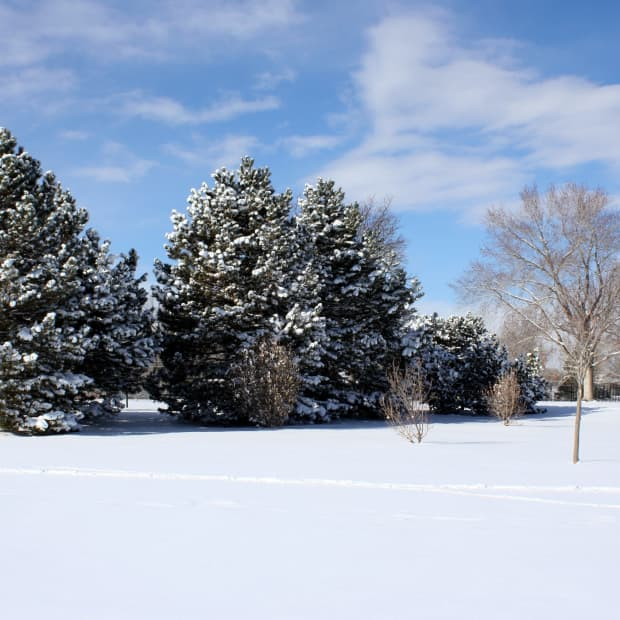 how-to-protect-new-trees-in-winter