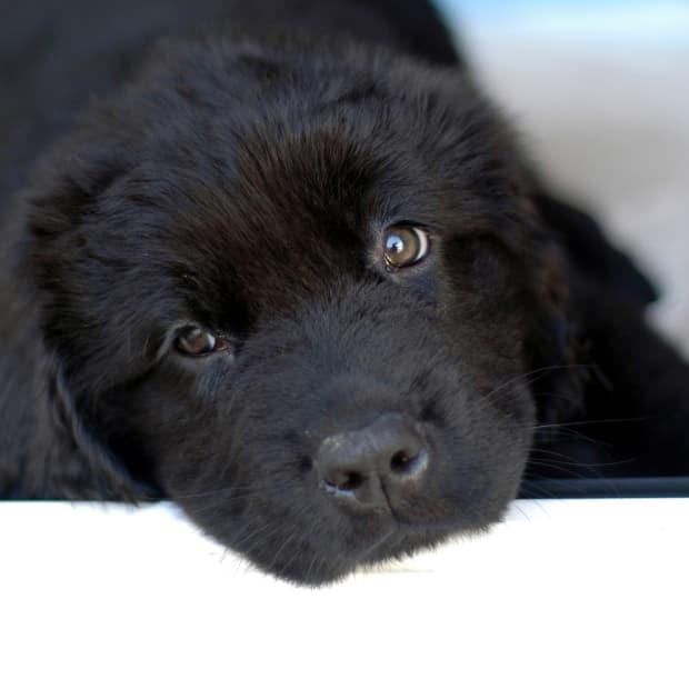 60-black-dog-names