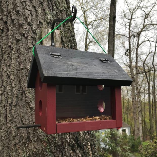 bluebird-feeder