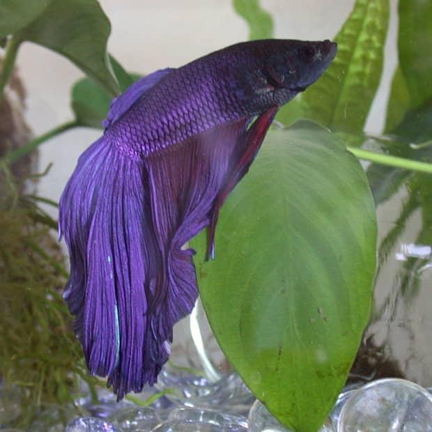 betta-fish-supplies-list