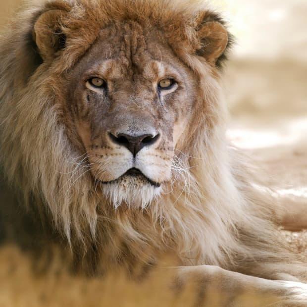 lion-names