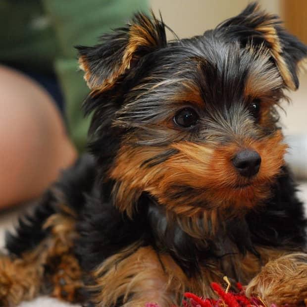 essential-supplies-new-puppy
