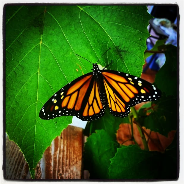 the-butterfly-effect-be-transformed