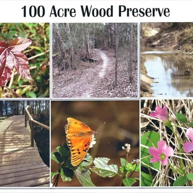 100-acre-wood-preserve-in-houston