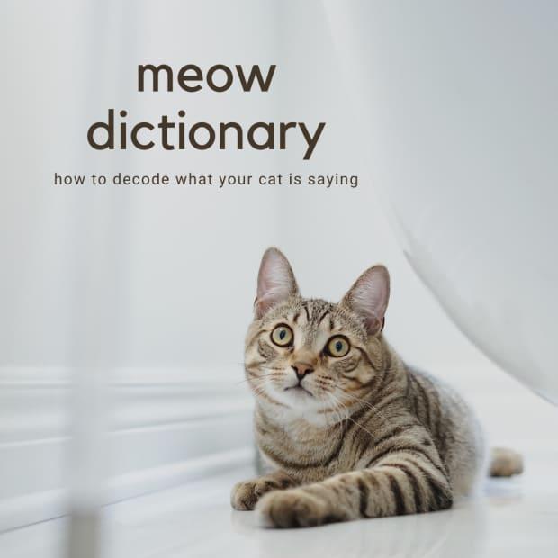 cat-language-explained