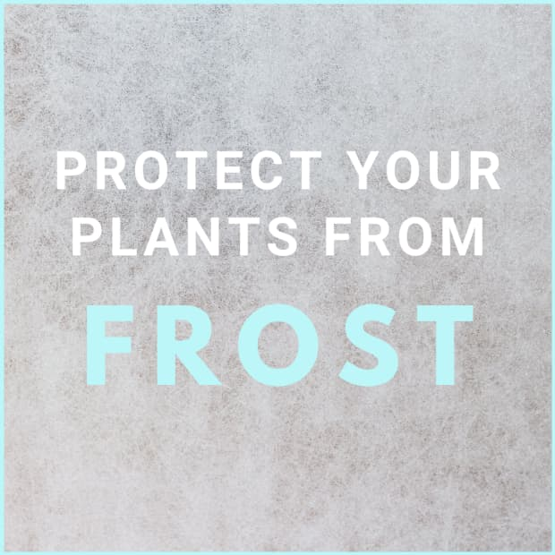 how-to-protect-your-garden-from-frost