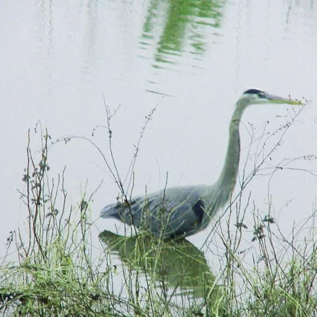 birdwatching---abeginersguidetobirdwatching