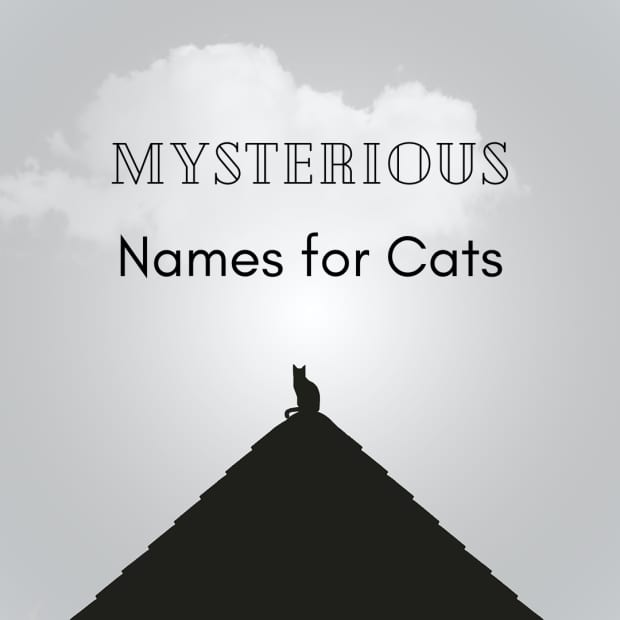 mysterious-names-for-cats