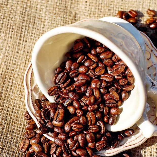 caffeine-activity-and-effects-in-humans-and-bumble-bees