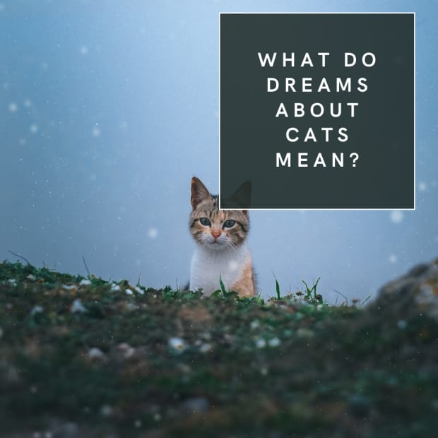What do dreams about cats mean