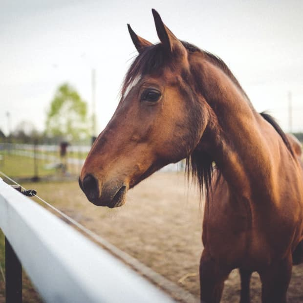 how-much-do-horses-cost