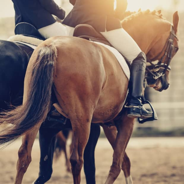 beginners-guide-to-horse-accessories