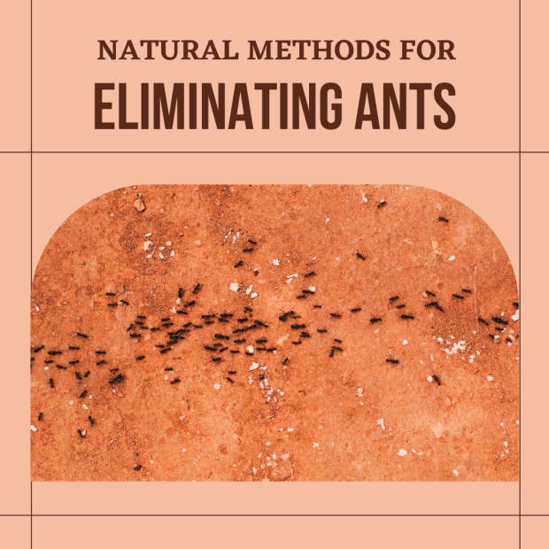 how-to-get-rid-of-ants-from-your-home