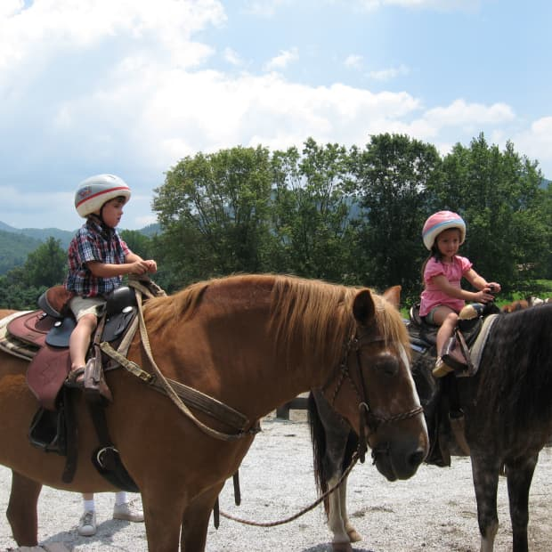 great-names-for-horses-ponies-donkeys-and-mules