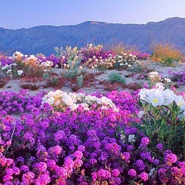 nature-haiku-desert-series-from-anza-borrego