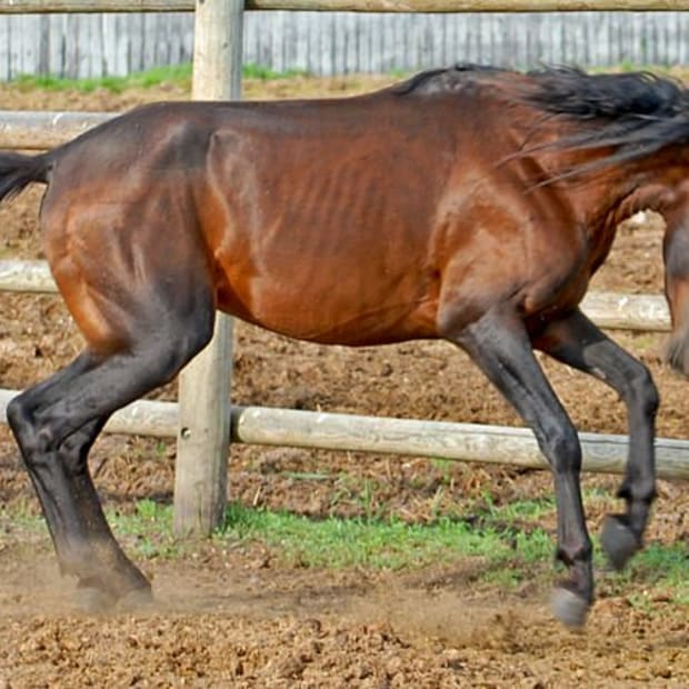rare-horse-breeds-facts-about-4-of-the-worlds-rarest-horses-breeds