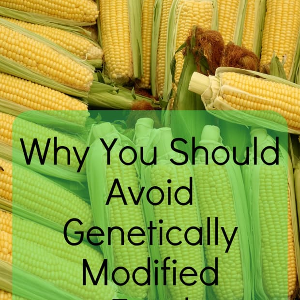 what-genetically-modified-foods-do-to-our-bodies