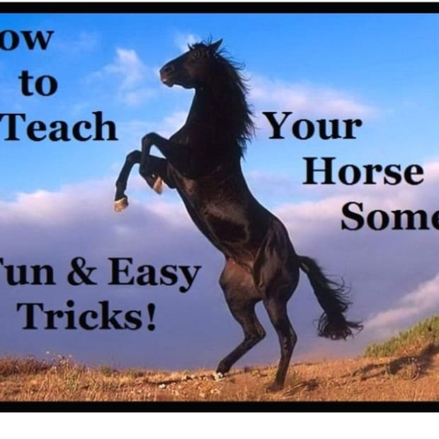 easy-tricks-to-teach-your-horse