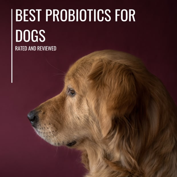 dog-diet-the-best-probiotics-for-dogs-with-diarrhea-and-allergies-reviewed