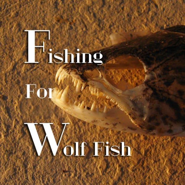 wolf-fish