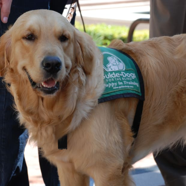 etiquette-when-dealing-with-assistance-dogs