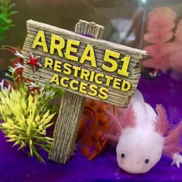 5-food-options-for-axolotls
